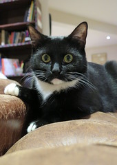 London (153) (Silvia Inacio) Tags: uk inglaterra england cats london cat alice gatos tuxedo shoreditch londres gata catscafe catemporium