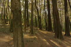 bosque cerro caracol (Mr.Corravus) Tags: parque ecuador arboles sony concepcion cerro viii region caracol 6000 a6000