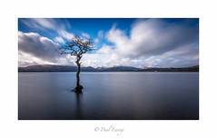 Milarrochy Bay Tree (Paul S Ewing) Tags: longexposure tree canon bay scotland still loch lomond lightroom milarrochy