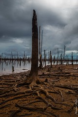 1 (Marcus Melo1) Tags: rio lago hidrelétrica amazonas balbina devastação crimeecológico