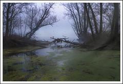 birds (paolo paccagnella) Tags: light green bird fog river italia paolo bbc waterscape veneto paccagnella yahoo:yourpictures=landscape canoneos5dm3 phpph© yahoo:yourpictures=photo yahoo:yourpictures=waterscape