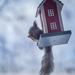 Squirrel's lunch thumbnail