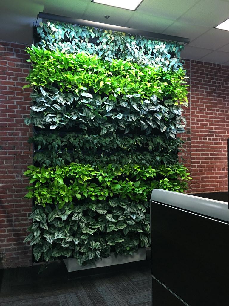 Gallery Of Living Wall Designs Indoor Outdoor