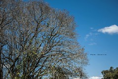 Dias de Primavera (Centim) Tags: cidade primavera brasil nikon foto br interior sãopaulo dia paisagem céu sp fotografia árvore vegetação estado américadosul país sudeste d90 interiordesãopaulo continentesulamericano