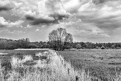 Dutch landscape (peterpj) Tags: bw art landscape nikon wandelen nederland sigma landschap d800 3514 duch geer nikonsigma drebergenzeist