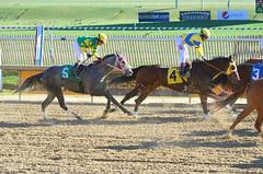"2016-01-03 (45) r3 Jevian Toledo on #5 More Stormyweather (JLeeFleenor) Tags: photos photography md marylandhorseracing marylandracing laurelpark jockey جُوكِي ""赛马骑师"" jinete ""競馬騎手"" dżokej jocheu คนขี่ม้าแข่ง jóquei žokej kilparatsastaja rennreiter fantino ""경마 기수"" жокей jokey người horses thoroughbreds equine equestrian cheval cavalo cavallo cavall caballo pferd paard perd hevonen hest hestur cal kon konj beygir capall ceffyl cuddy yarraman faras alogo soos kuda uma pfeerd koin حصان кон 马 häst άλογο סוס घोड़ा 馬 koń лошадь maryland"