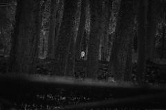 Ghost Runner (PetterZenrod) Tags: blackandwhite bw tree texture girl sport forest running deporte corredor correr