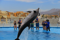 Freda airborne (greggburch) Tags: cabosanlucas caboadventuresdolphinswim