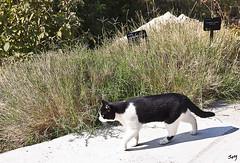 Gat catal. Jard Botnic, Montjuc. (svet.llum) Tags: barcelona animal gato catalunya gat catalua montjuic montjuc