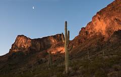 Half Moon Picacho (courtney_meier) Tags: morning arizona moon sunrise wow dawn morninglight glow desert tucson saguaro picachopeak sonorandesert alpenglow halfmoon desertspring