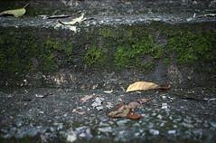 fallen leaves (Steve only) Tags: color film leaves lomo lomography negative snaps epson 100 40mm smc ricoh f28 kr10 128 pentaxm 4028 v750 gtx970