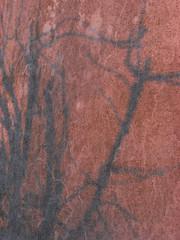 like skin (the incredible how (intermitten.t)) Tags: shadow wall lowsun theranch radula 6776 20160427