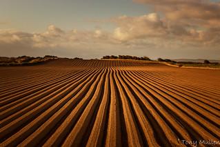 Gormanston Fields