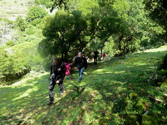 Ikaria's remotest hinterland 56 - climbing out of the valley to the desert plateaus (angeloska) Tags: forest march ikaria aegean greece hikers pezi hinterland hikingtrails   langada ikarians    vrakades  opsikarias