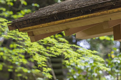 Eave (Scott DeSelle) Tags: canon portland japanesegarden acratech reallyrightstuff rrs eos7dmarkii