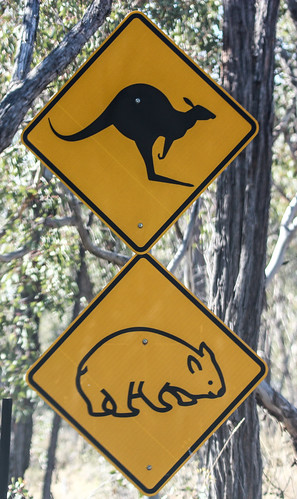 Wildlife Road Sign