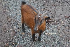 DSC_0036 (Rinswid) Tags: park nature animal spring kharkov feldman ecopark