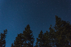 Trees and Stars (JustinMullenPhotography) Tags: blue trees sky mountains tree green nature night stars star washington nikon university space central hills astrophotography wilderness ellensburg