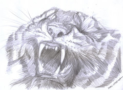 tigre a lapiz (ivanutrera) Tags: wild animal pencil sketch drawing wildlife tiger lapiz draw dibujo tigre dibujoalpiz tigrealpiz