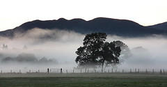 Evening mist of the A811 (Ray Crabb) Tags: trees mist tree fence evening gate 2014 drymen scotchmist a811