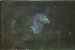 what was that you said? (bensn) Tags: flowers sky mountain flower film japan pentax limited 800 nagano fa multiexposure asama mzs f19 43mm fujicolorpressdxf