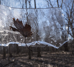 Canada is suddenly trapped between winter and spring (marianna - away for a while) Tags: trees winter canada ice water frozen leaf spring maple sdof mariannaarmata p2220988