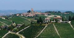Piemont, vineyards (duqueros) Tags: italien italy green landscape vineyard italia vine grn landschaft reben wein piemont duqueiros