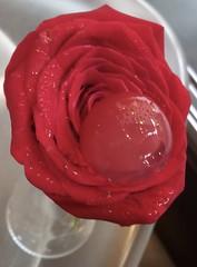 "The Rose, lychee and raspberry  sphere, with a rosewater gelatine, Bar Tickets, Barcelona. (heraldeixample) Tags: barcelona españa rose bar de tickets spain sweet bcn rosa catalonia raspberry catalunya ""el adrià cataluña gelatine rosewater dulce lychee catalogna litchi espanya gelatina catalogne roses"" frambuesa ""albert dolç gerds ""bar litxi tickets"" albertdelahoz heraldeixample bulli"" ""aigua adrià"""