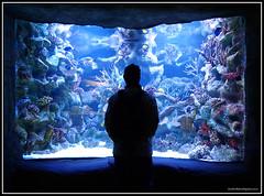 Mundo Mágico (Caro Rolando) Tags: peces temaiken
