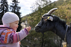 Familien-Ziege-Aletsch-Arena (aletscharena) Tags: schweiz wallis familien unescowelterbe naturpur familienurlaub aletscharena familienwillkommen