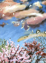 APRIL REDBUDS AT DUSK--1994 (sadler0) Tags: trees sunset birds dusk egrets redbuds bloomingtrees rogersadler