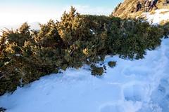 IMG_0407 (JIMI_lin) Tags: sunset snow taiwan  tw       hehuanmountain
