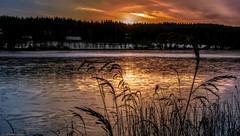 Newly frozen lake at sunrise (Patrik Estius) Tags: sea lake snow ice nature sunrise frozen nikon europe gallery sweden outdoor schweden norden skandinavien smland nordic sverige scandinavia sn suecia jnkping sj sude nordique nrdico escandinavia lekeryd scandinavie nordisch estius jnkpingsln d3300 patrikestius uddebosjn