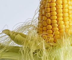 Sweet Sensation V2 (PhotosbyDi) Tags: vegetables yellow corn vegetable sweetcorn cornonthecob nikond600 macromondays tamronf2890mmmacrolens