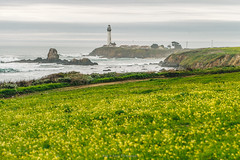 The lighthouse (Bust it Away Photography) Tags: ocean california travel flowers sea lighthouse green clouds landscape coast nikon rocks outdoor highway1 pigeonpoint bustitawayphotography nikondf