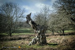 My favourite tree stump....