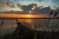The_Oasis. Sunset. (Anacronimo.) Tags: sunset sky sun clouds reflex tramonto nuvole oasis sole saline tarquinia riserva