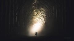 Camino de historias. (PetterZenrod) Tags: road art forest camino bosque mosse alce