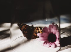 (migueenciso) Tags: flowers wallpaper beautiful canon 50mm spain background awesome butterflies 18 malaga 70d tumblr vsco vscofilm vscocam canon50mm18stm