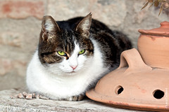 Lazing (Lucx90) Tags: italy animals closeup cat countryside tuscany