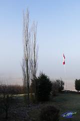 Trees (cj berry) Tags: autumn trees sunlight canada fog bare flag foggy pole alberta hanging lacombe