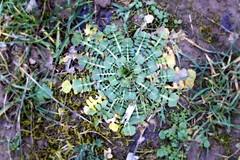 Dizzy weet (Zandgaby) Tags: green outdoors spherical weet dizzymaking
