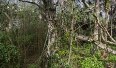 DSC07620NX5Na  Tall Cypress Natural Area  © 2016 Paul Light (Paul Light) Tags: florida