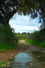 water in the road-Extremadura-W-1 (taocgs) Tags: road espaa landscape countryside spain stream open camino path paisaje campo brook cceres arroyo extremadura