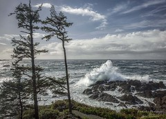 Big Beach, Ucluelet - always a different sight with each and every wave that strikes the rocky shore. (Freshairphotography) Tags: ocean trees water britishcolumbia vancouverisland pacificocean westcoast ucluelet hightide crashingwaves rocksandwater bigbeach beautifulbc stormyseas coastaltrees blackrockresort explorebc explorevancouverisland iloveucluelet