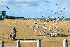 38. Cool Grannies Don't Look at Bird Explosions (EmSixTeen) Tags: sea england woman seagulls seascape beach birds kent seaside chaos feeding seagull gull gulls explosion gran granny margate frenzy grannie thanet baglady d3200