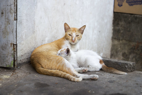 Yangon Cats
