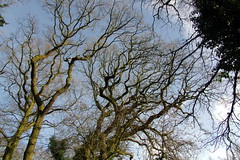 25.3.16 Delamere Forest 55 (donald judge) Tags: trees water forest countryside cheshire mere delamere