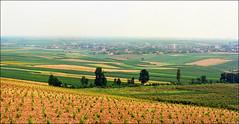 Future vineyard (Katarina 2353) Tags: panorama film nature field landscape vineyard nikon europe serbia vojvodina srbija beska katarinastefanovic katarina2353