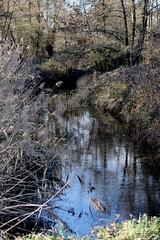 Reflections (Ondeia) Tags: italia colours peace acqua lilla riflesso abbazia morimondo
